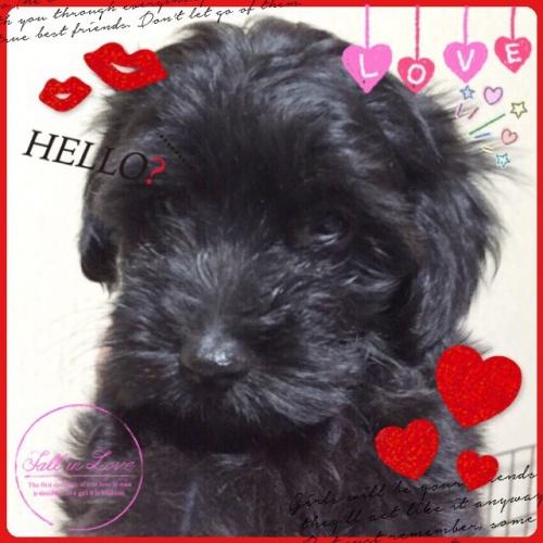 ミックスの子犬(ID:1259911006)の2枚目の写真/更新日:2015-12-16