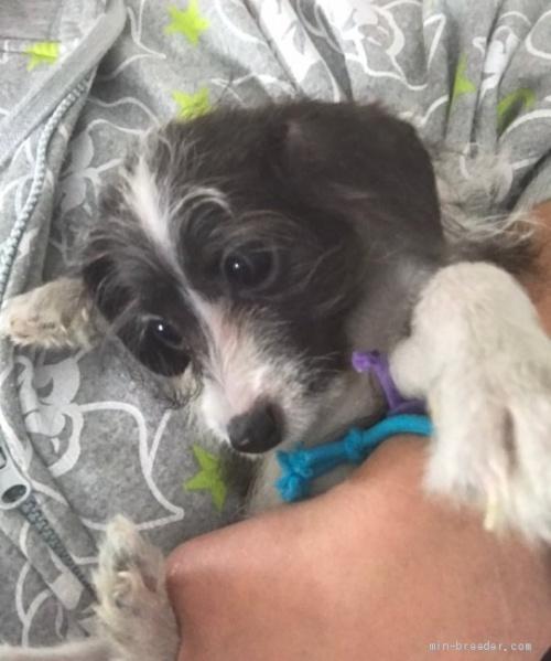 ミックスの子犬(ID:1262911006)の3枚目の写真/更新日:2019-11-11