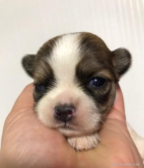 ミックスの子犬(ID:1262911025)の1枚目の写真/更新日:2019-11-11