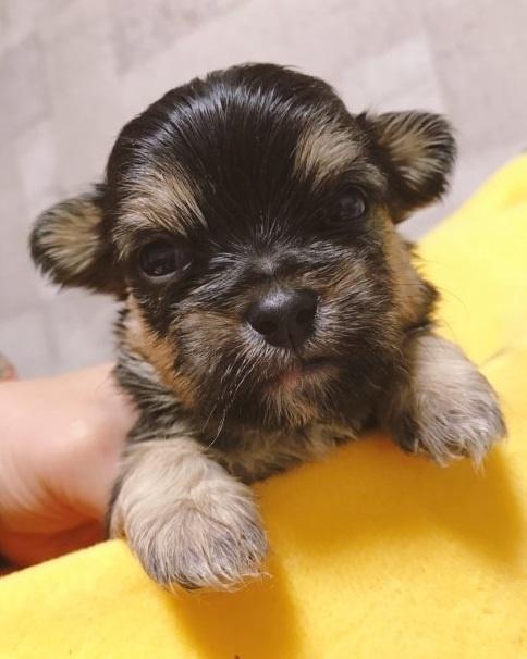 ミックスの子犬(ID:1262911042)の1枚目の写真/更新日:2019-11-11