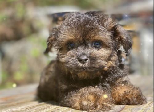 ミックスの子犬(ID:1262911043)の1枚目の写真/更新日:2019-09-02