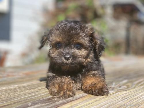 ミックスの子犬(ID:1262911043)の4枚目の写真/更新日:2021-09-13