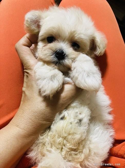 ミックスの子犬(ID:1265311049)の2枚目の写真/更新日:2021-07-29