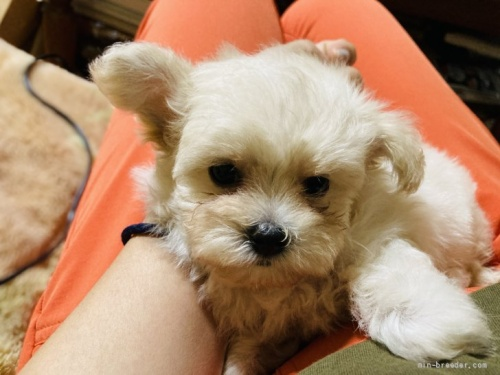 ミックスの子犬(ID:1265311049)の4枚目の写真/更新日:2021-07-29