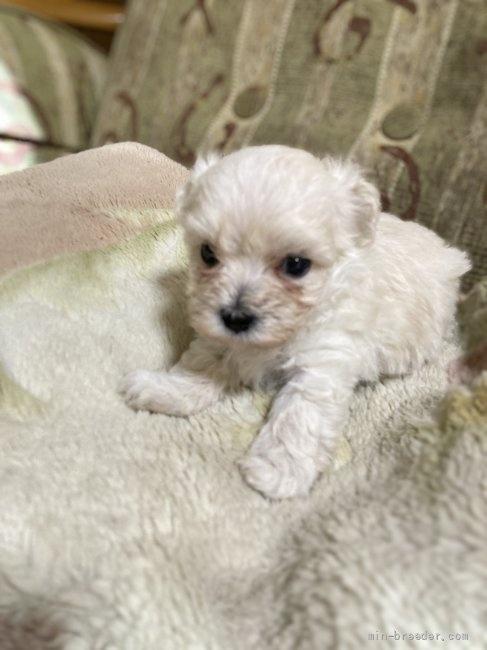 ミックスの子犬(ID:1265311053)の2枚目の写真/更新日:2021-07-26