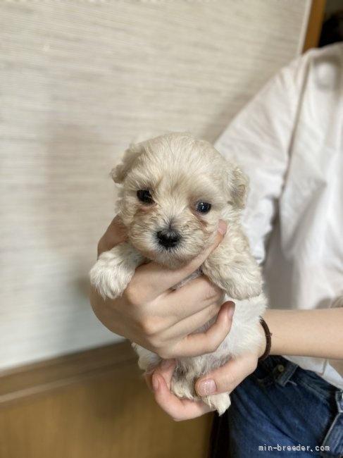 ミックスの子犬(ID:1265311053)の3枚目の写真/更新日:2021-07-26