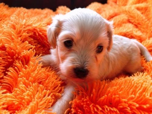 ミックスの子犬(ID:1266311005)の2枚目の写真/更新日:2019-10-24