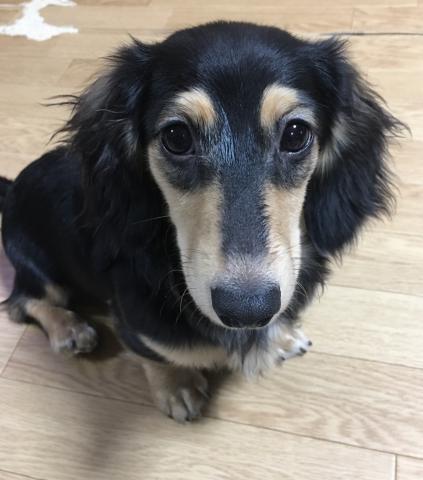 ミックスの子犬(ID:1266311009)の1枚目の写真/更新日:2019-03-11