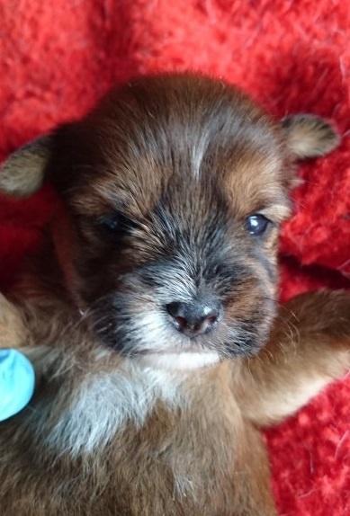ミックスの子犬(ID:1266911027)の1枚目の写真/更新日:2019-06-07