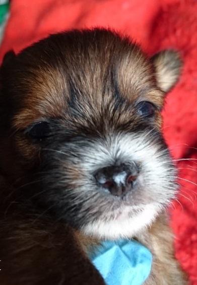 ミックスの子犬(ID:1266911028)の1枚目の写真/更新日:2019-06-07