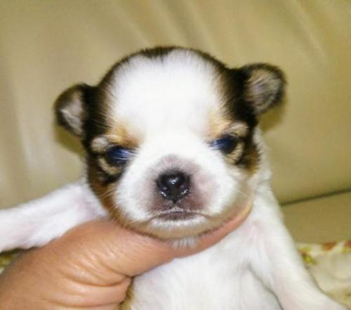 ミックスの子犬(ID:1267811037)の1枚目の写真/更新日:2017-11-28