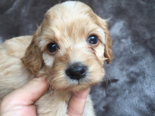 ミックスの子犬(ID:1267911003)の1枚目の写真/更新日:2018-07-24