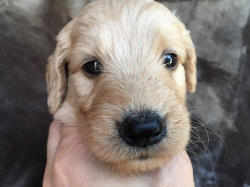 ミックスの子犬(ID:1267911005)の1枚目の写真/更新日:2017-03-01