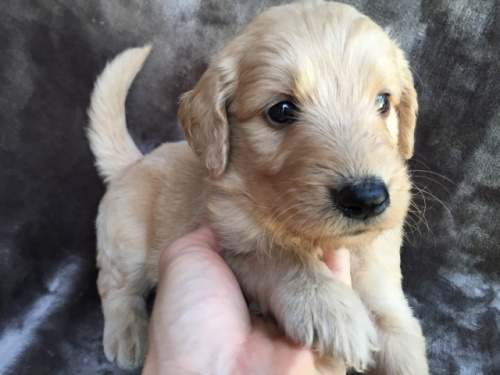 ミックスの子犬(ID:1267911005)の3枚目の写真/更新日:2018-05-28
