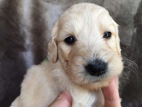 ミックスの子犬(ID:1267911006)の1枚目の写真/更新日:2018-05-28