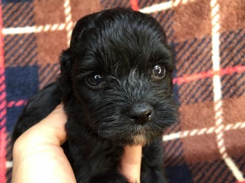 ミックスの子犬(ID:1267911007)の1枚目の写真/更新日:2017-04-27