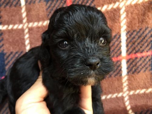 ミックスの子犬(ID:1267911007)の2枚目の写真/更新日:2017-04-27