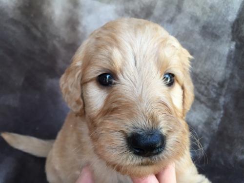 ミックスの子犬(ID:1267911011)の1枚目の写真/更新日:2017-06-09