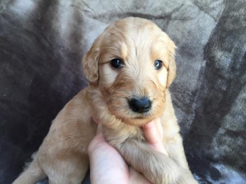 ミックスの子犬(ID:1267911011)の2枚目の写真/更新日:2017-06-09
