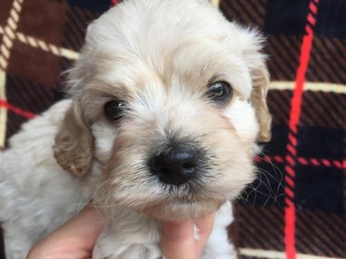 ミックスの子犬(ID:1267911014)の2枚目の写真/更新日:2017-08-29