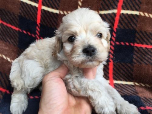 ミックスの子犬(ID:1267911014)の3枚目の写真/更新日:2017-08-29