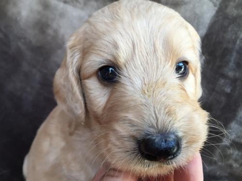 ミックスの子犬(ID:1267911015)の1枚目の写真/更新日:2017-08-29