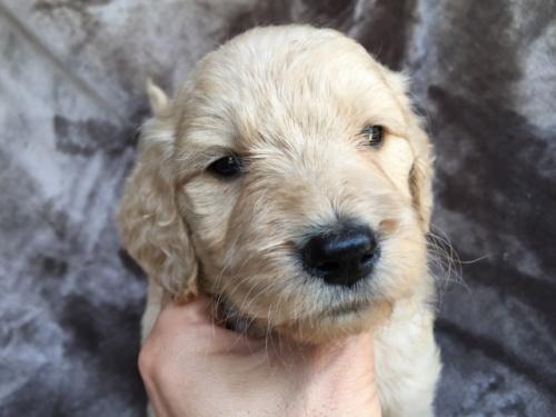ミックスの子犬(ID:1267911016)の1枚目の写真/更新日:2018-06-12