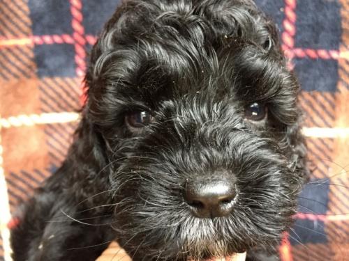 ミックスの子犬(ID:1267911019)の1枚目の写真/更新日:2017-10-16