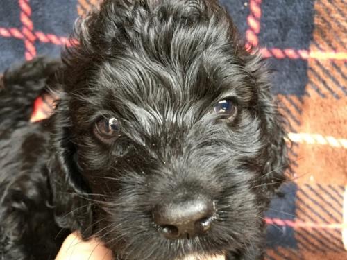 ミックスの子犬(ID:1267911020)の1枚目の写真/更新日:2017-12-11