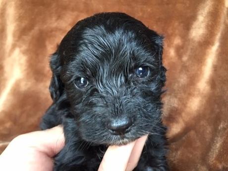 ミックスの子犬(ID:1267911026)の1枚目の写真/更新日:2018-01-08