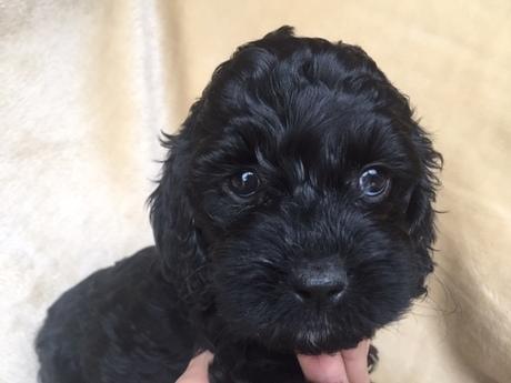 ミックスの子犬(ID:1267911029)の1枚目の写真/更新日:2018-01-29