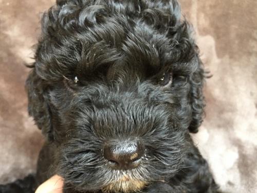 ミックスの子犬(ID:1267911031)の1枚目の写真/更新日:2018-01-29
