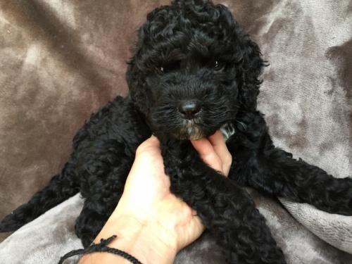 ミックスの子犬(ID:1267911031)の2枚目の写真/更新日:2018-01-29