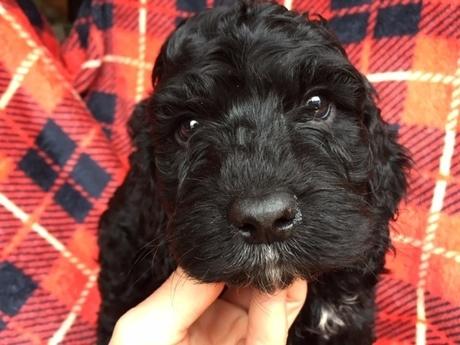 ミックスの子犬(ID:1267911032)の1枚目の写真/更新日:2018-02-19