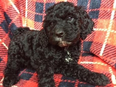 ミックスの子犬(ID:1267911034)の1枚目の写真/更新日:2018-03-01