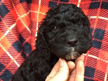 ミックスの子犬(ID:1267911034)の2枚目の写真/更新日:2018-03-01