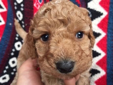 ミックスの子犬(ID:1267911036)の1枚目の写真/更新日:2018-03-14