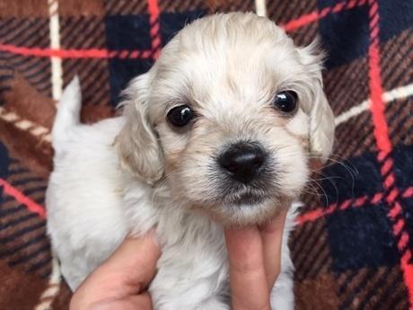 ミックスの子犬(ID:1267911037)の1枚目の写真/更新日:2018-03-14