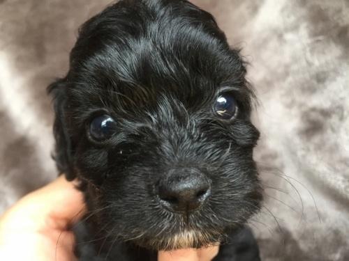 ミックスの子犬(ID:1267911047)の1枚目の写真/更新日:2018-07-24