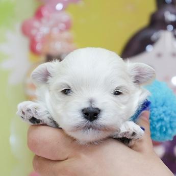 ミックスの子犬(ID:1269711042)の1枚目の写真/更新日:2019-01-11