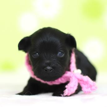 ミックスの子犬(ID:1269711044)の2枚目の写真/更新日:2019-01-11