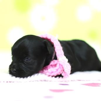 ミックスの子犬(ID:1269711044)の3枚目の写真/更新日:2019-01-11