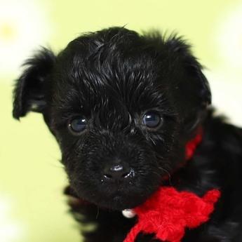 ミックスの子犬(ID:1269711045)の1枚目の写真/更新日:2019-02-12