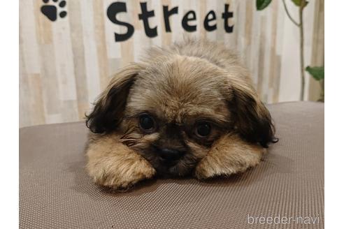 ミックスの子犬(ID:1269811002)の1枚目の写真/更新日:2017-10-16