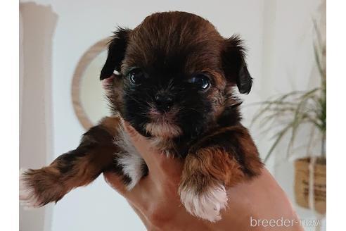 ミックスの子犬(ID:1269811004)の1枚目の写真/更新日:2017-12-16