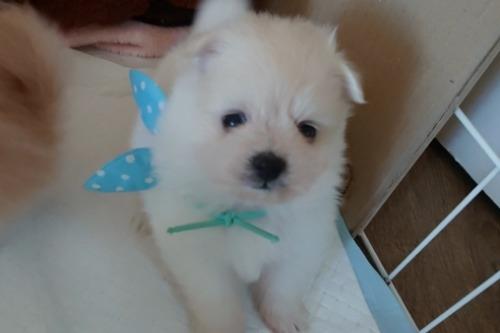 ミックスの子犬(ID:1269811011)の1枚目の写真/更新日:2017-12-16