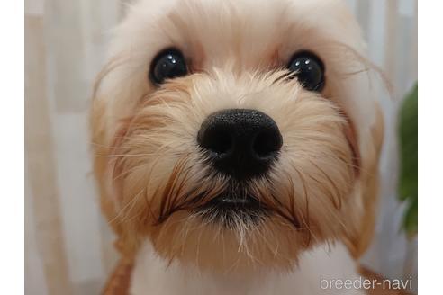 ミックスの子犬(ID:1269811012)の1枚目の写真/更新日:2018-01-11