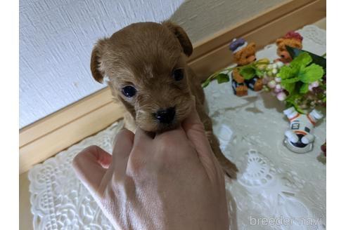 ミックスの子犬(ID:1270611021)の1枚目の写真/更新日:2020-12-18