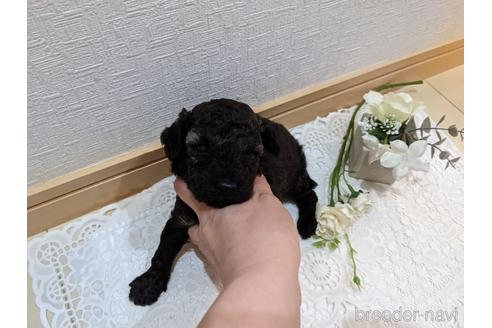 ミックスの子犬(ID:1270611024)の1枚目の写真/更新日:2021-02-21