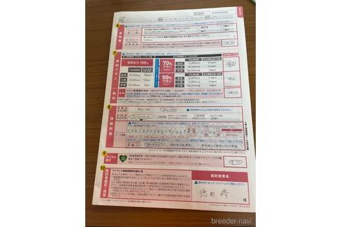 チワワ(ロング)の子犬(ID:1271311080)の3枚目の写真/更新日:2021-06-25